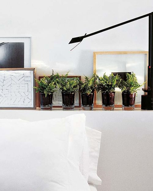 helechos plantas pequeñas macetas ideas decoracion verde tendencias interiores