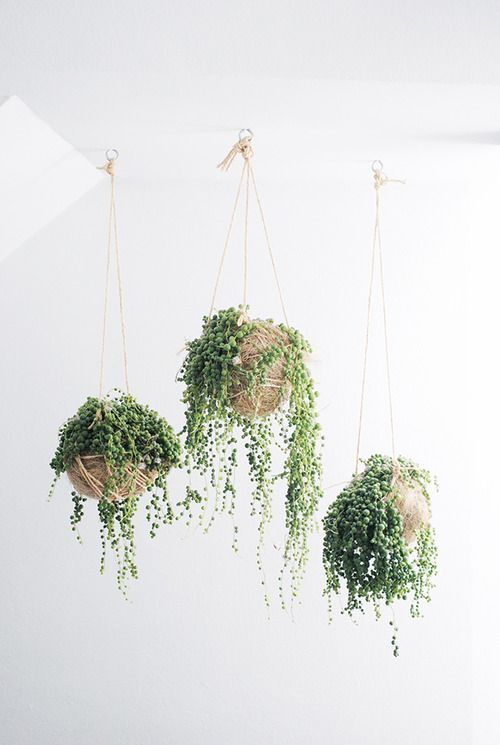 plantas colgantes verdes ideas decoracion interiores