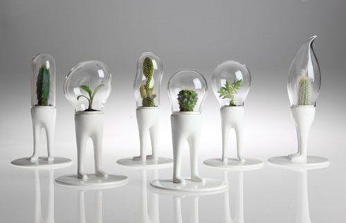 domsai cactus matteo cibis