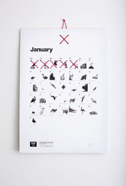 calendario 2013 bbc almost extinct calendar
