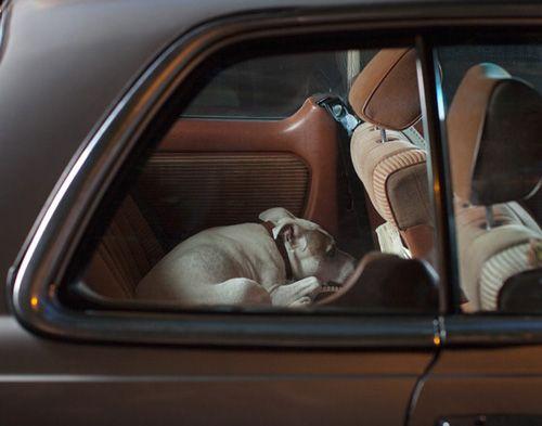 Retratos caninos de Martin Usborne