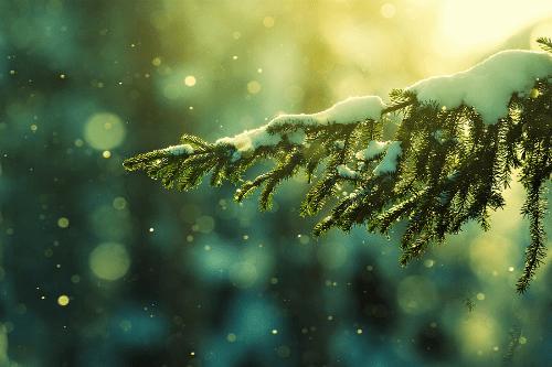 Navidad nevada