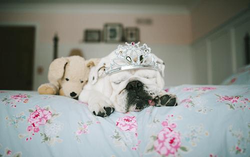 Fotografía de la bulldog francesa Lola