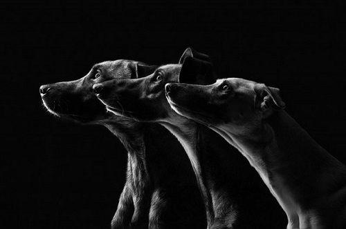 Fotografías de sus perros de la artista Elke Vogelsang 03