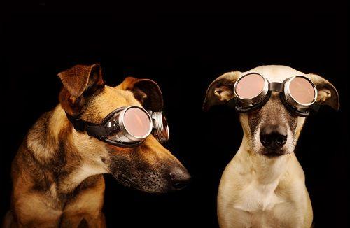 Fotografías de sus perros de la artista Elke Vogelsang 08