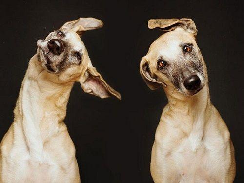 Fotografías de sus perros de la artista Elke Vogelsang