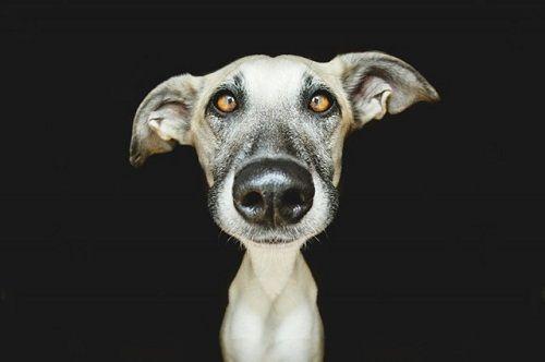 Fotografías de uno de los perros de Vogelsang 03