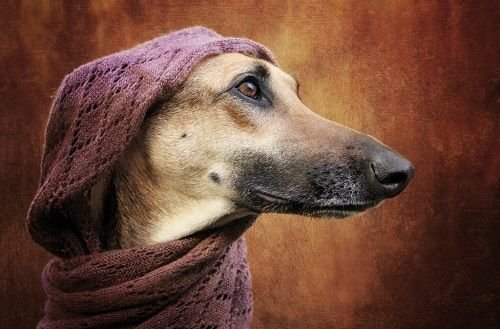 Fotografías de uno de los perros de Vogelsang 04