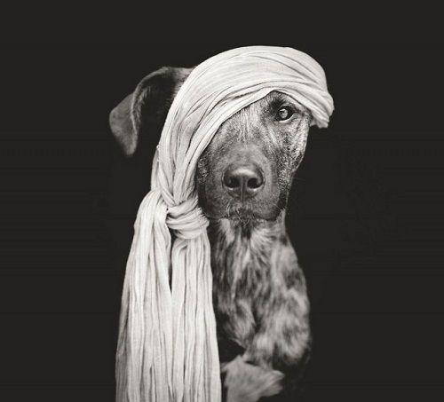 Fotografías de uno de los perros de Vogelsang