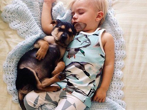 Theo y Beau amigos