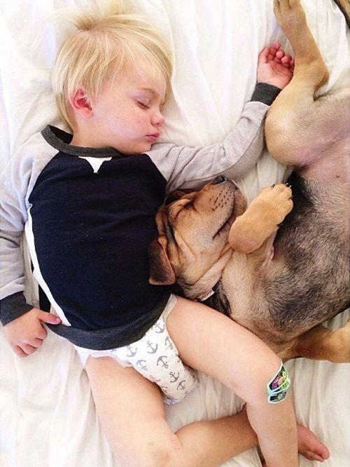 Theo y Beau durmiendo la siesta