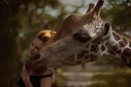fotografía con una jirafa