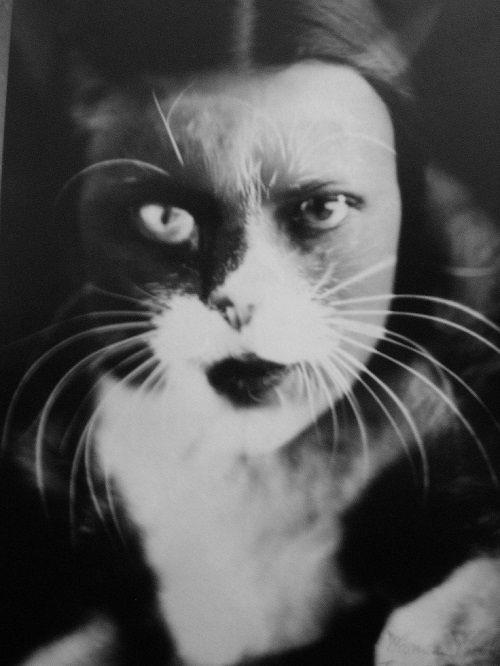 wanda wulz cat