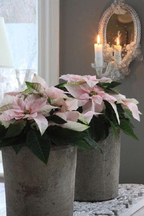 estilo decoracion de navidad flor de pascua (1)