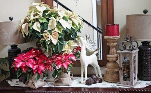 estilo decoracion de navidad flor de pascua (10)