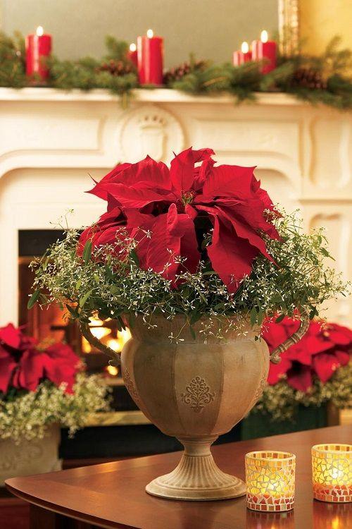 estilo decoracion de navidad flor de pascua (2)