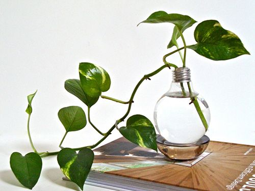 bombilla maceta ideas decoracion interior con plantas verdes reciclaje eco