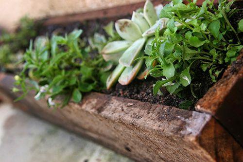 decoracion huerto plantas verdes de interior