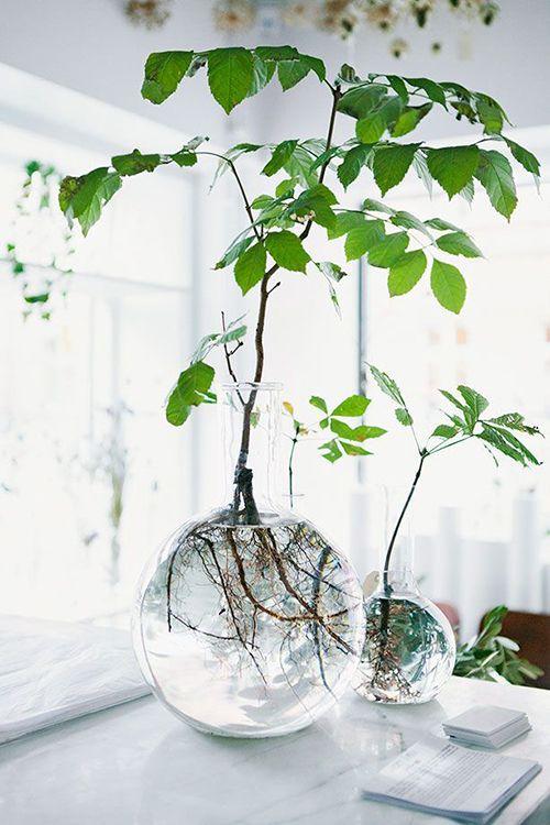 macetas redondas transparente plantas verdes decoracion interiores