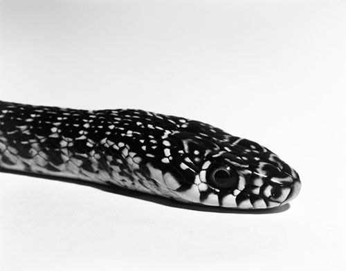 fotografia serpiente aleix plademunt premio revelacion photoespaña 2015