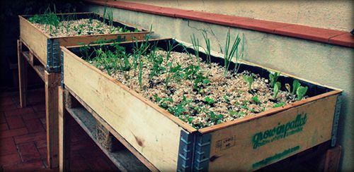 growing pallets huertos urbanos barcelona