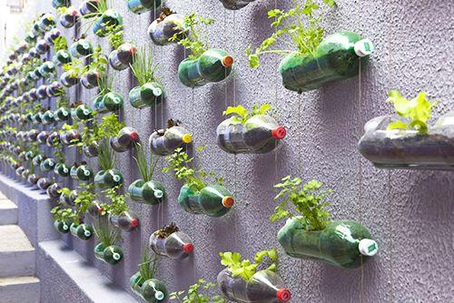 huerto urbano botellas reciclaje autocultivo ecologico ciudad