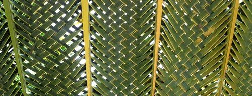 trenzado tradicional con hoja de palma