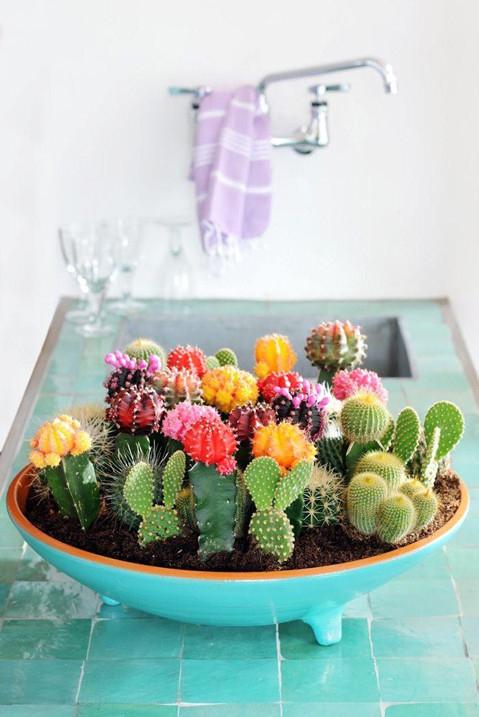 Cactus centro
