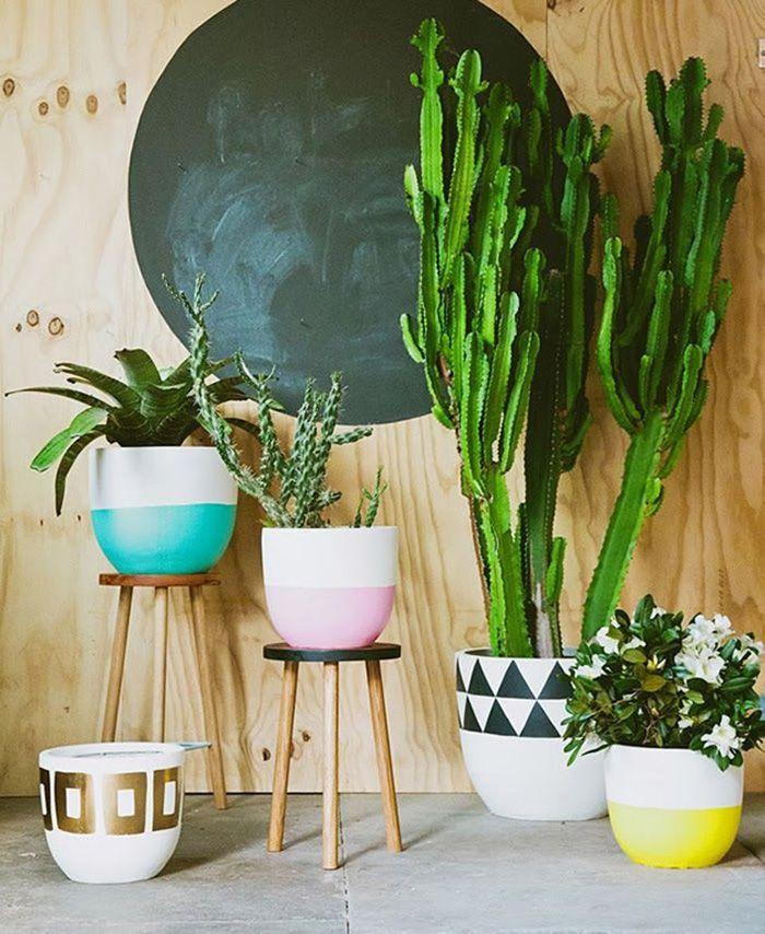El cactus como tendencia decorativa
