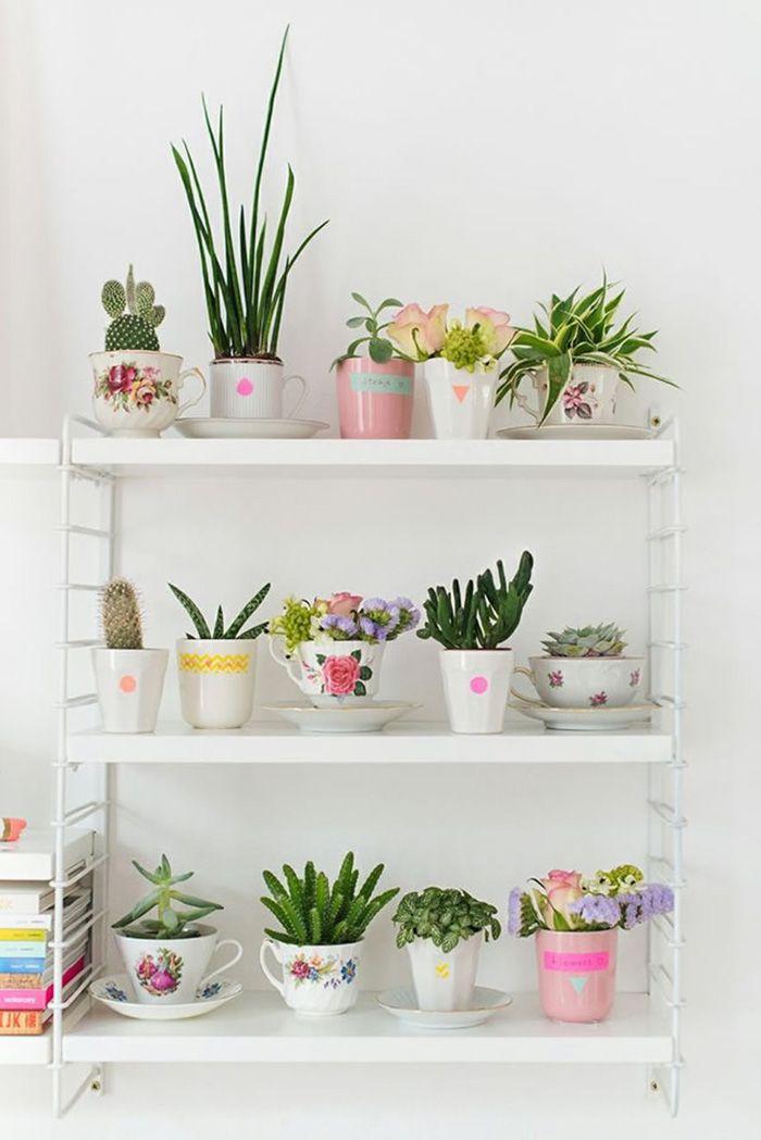 cactus estantería