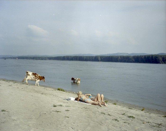 lurdes r basoli danube iii vacas danubio rio mujeres tomando el sol photoespana 2016
