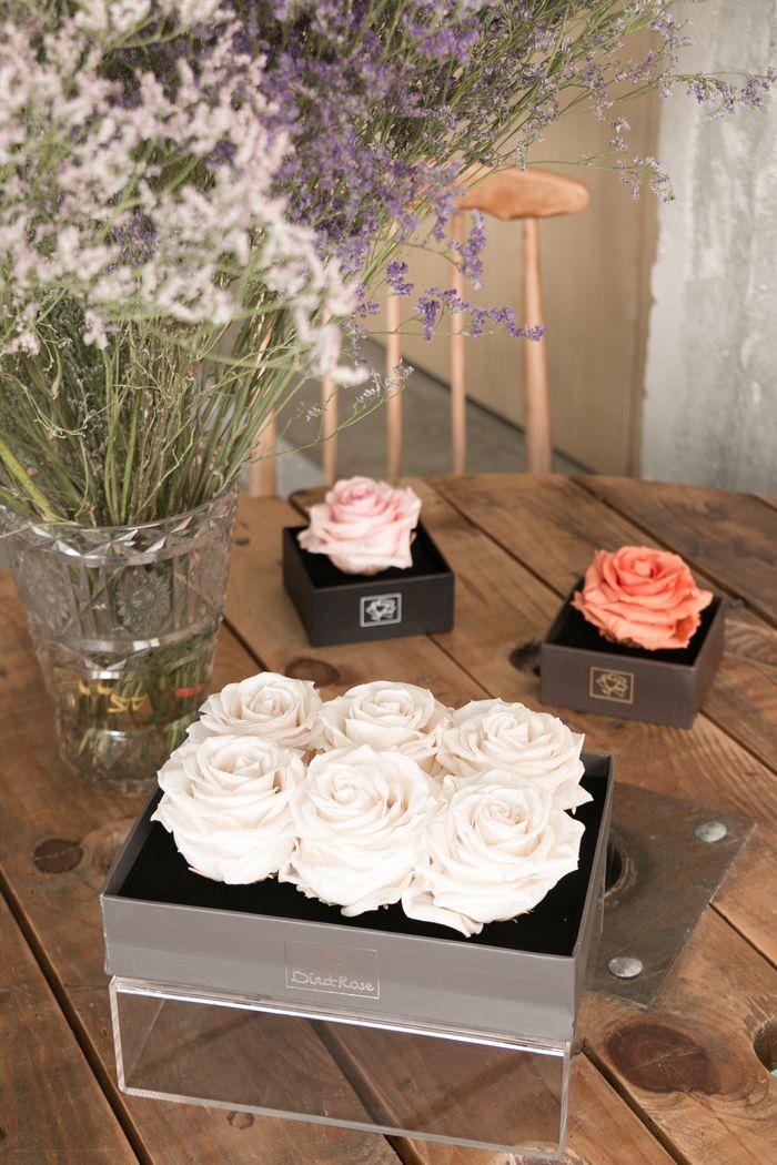 Seis rosas preservadas en caja transparente y rosas y coral