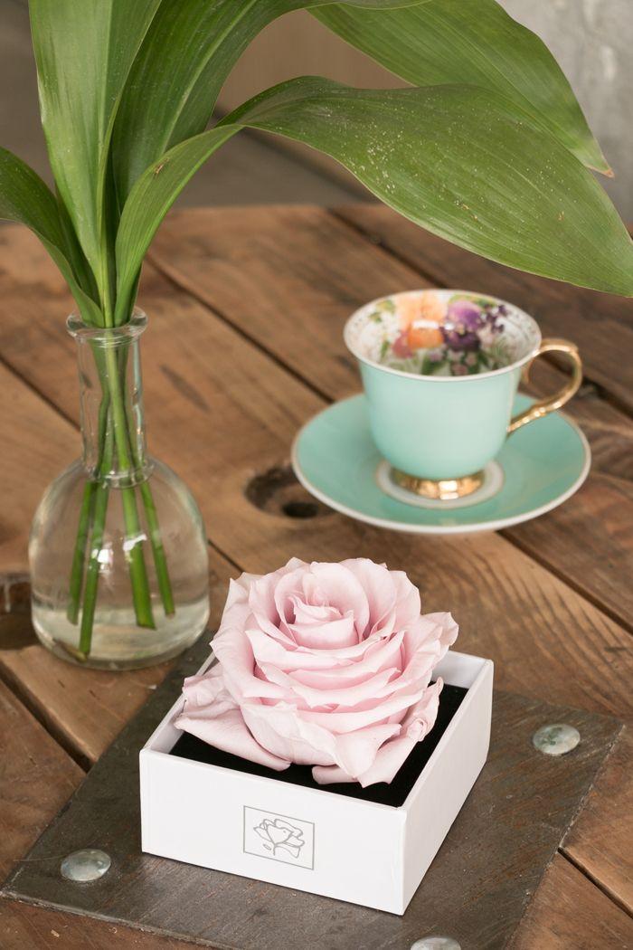 rosa preservada rosa en caja blanca cuadrada