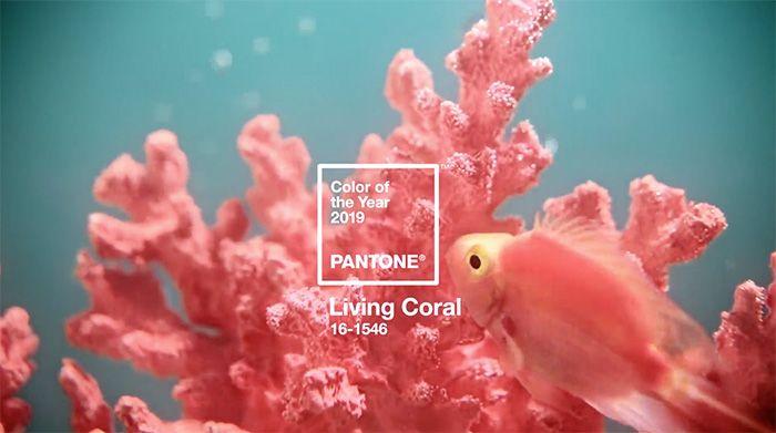 Pantone ya ha anunciado el color del año 2019: Living Coral