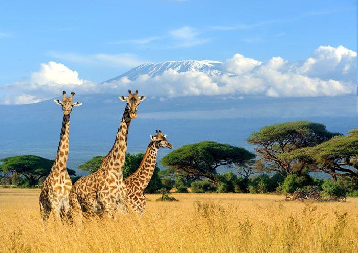 viaje a kenia sabana