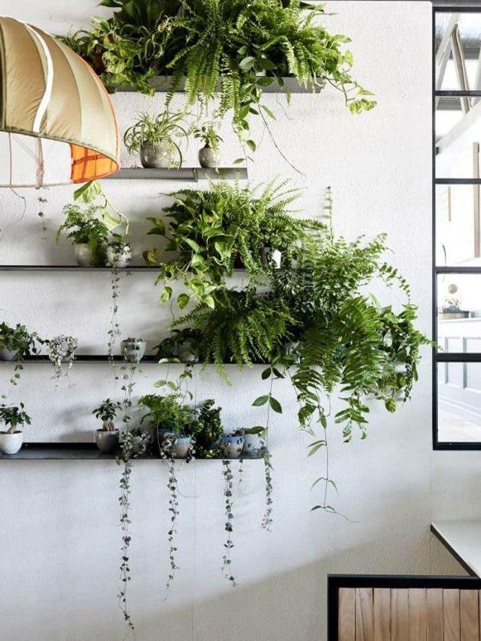 plantas de interior en estanteria