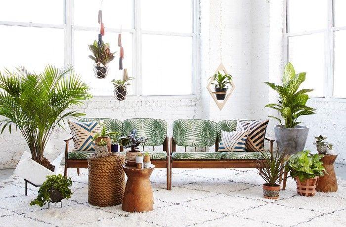 salon plantas