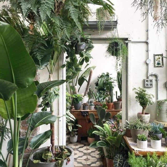 vivero plantas interior