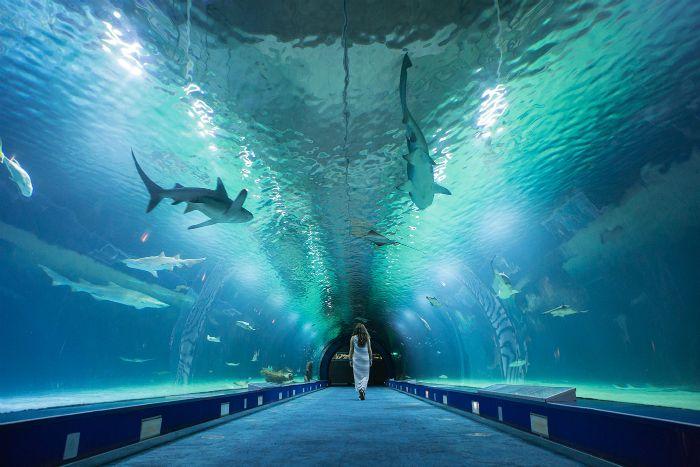 Oceanographic, el mayor acuario de Europa