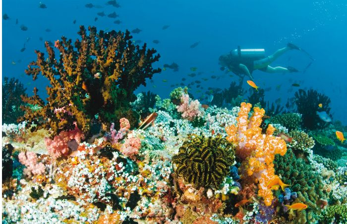 profundidades mar esnorquel maldivas