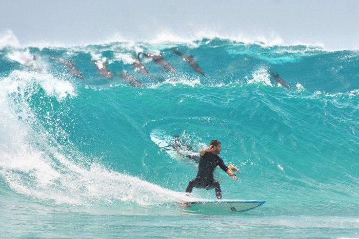 surfista en ola australia