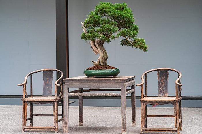 bonsai decoracion oriental