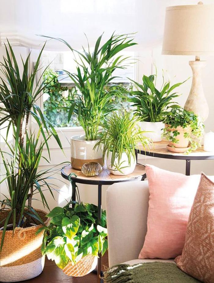 Decoterapia decoracion vegetal interiores