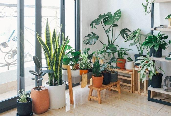 Decorar con plantas exóticas el interior de tu casa