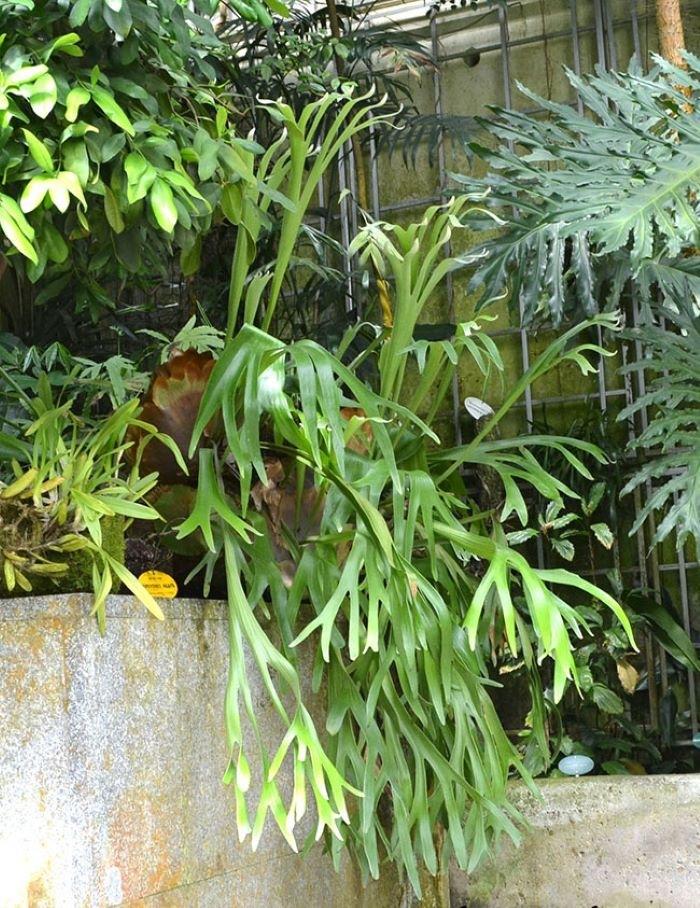 planta exótica para interior
