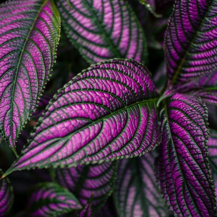 Planta exótica para interior de tu casa
