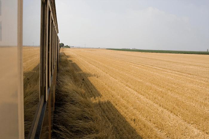 campos castilla amarillos