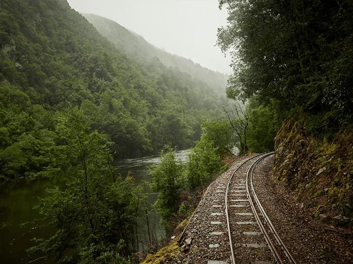 via de tren en paisaje boscoso
