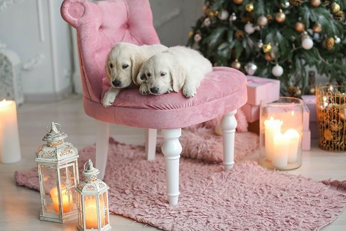 Habitación con silla rosa y con dos perros