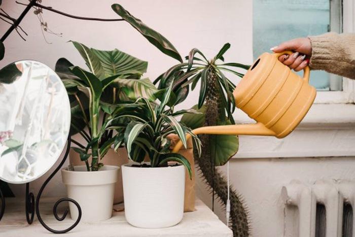 Mujer regando las plantas de diseño en interior